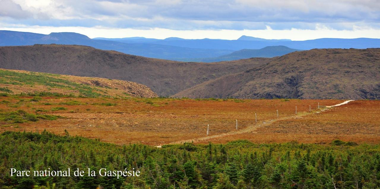 Automne Gaspésien